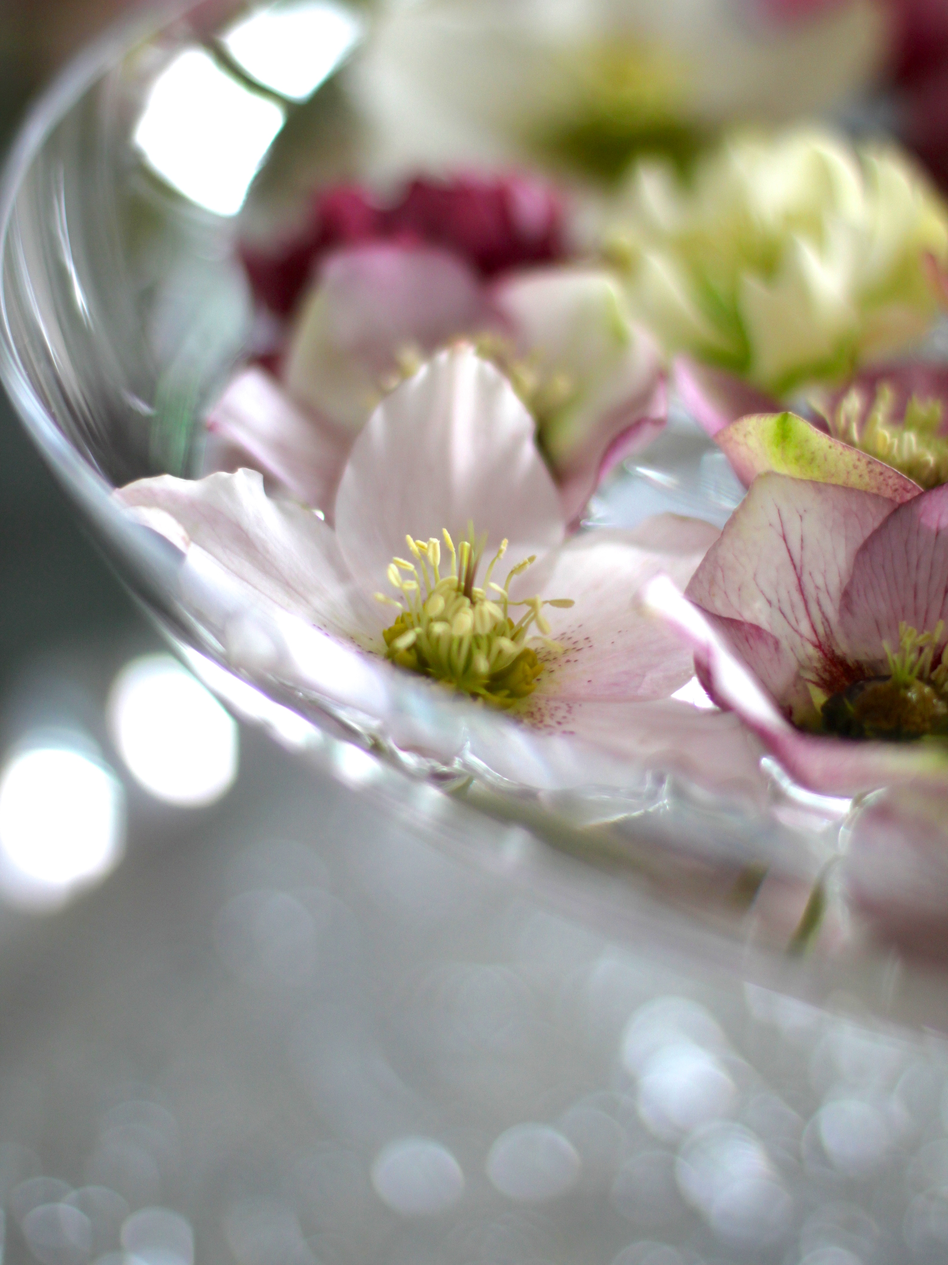 Floating-Hellebores