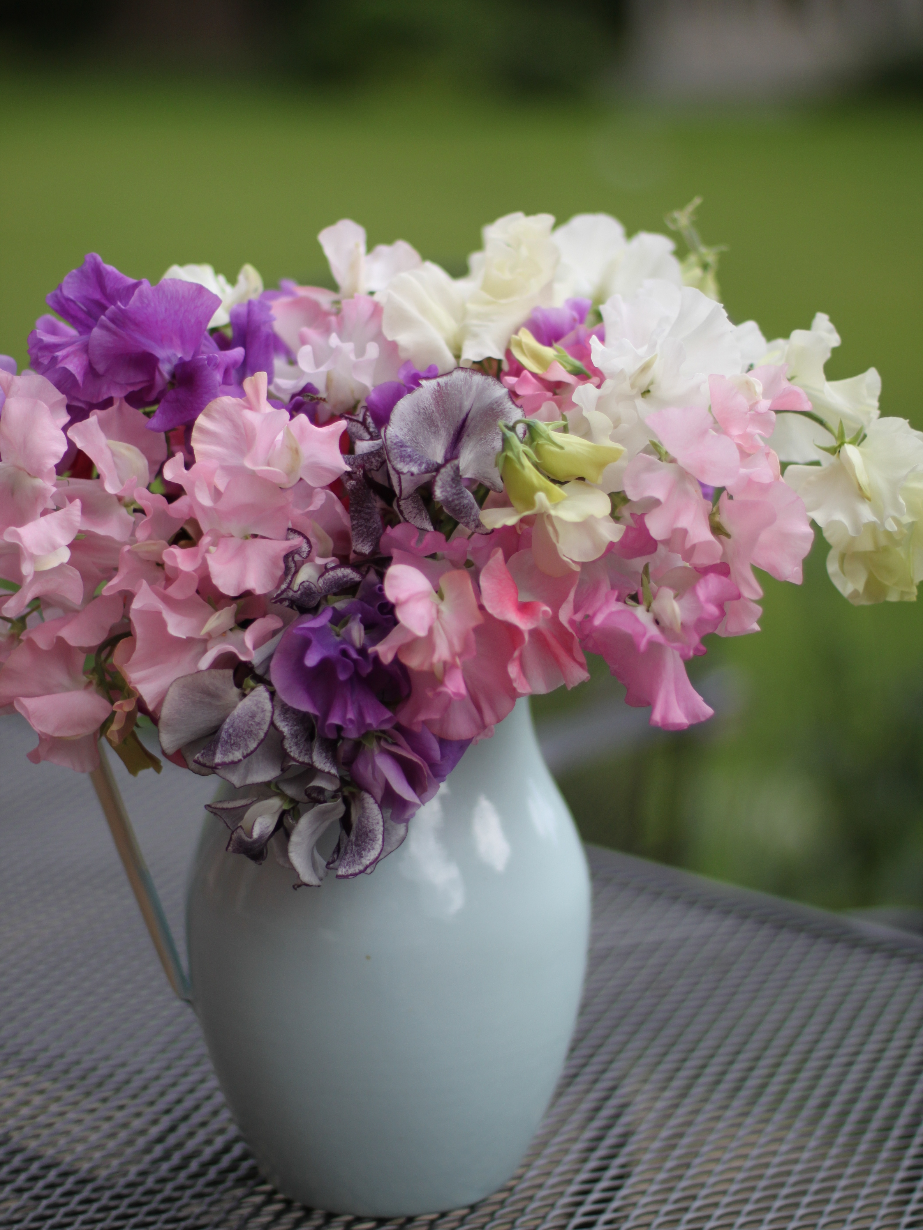In a vase on monday sweet peas rosesindulging floral passions sweet peas reviewsmspy