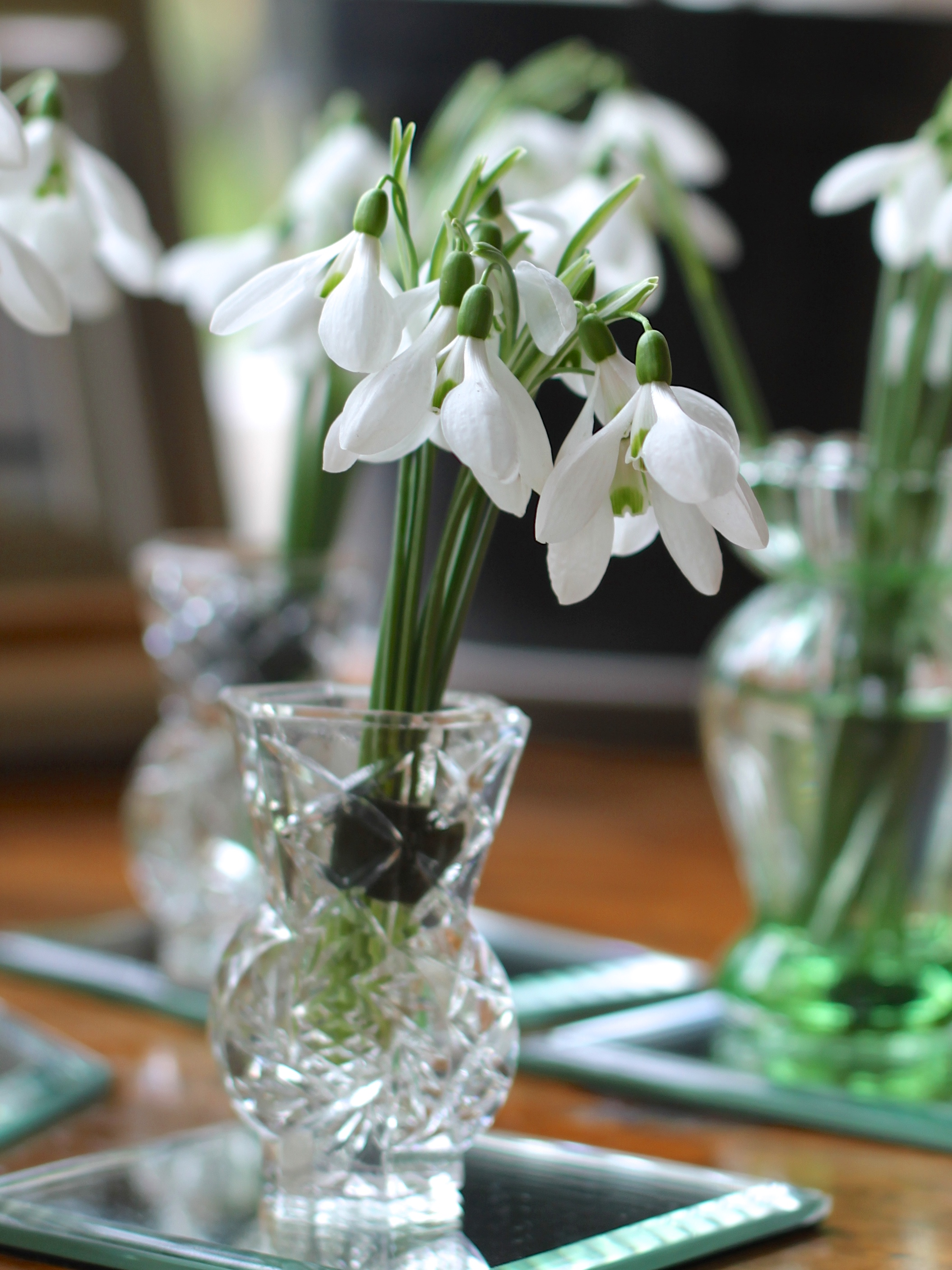 Snowdrop-Arrangement