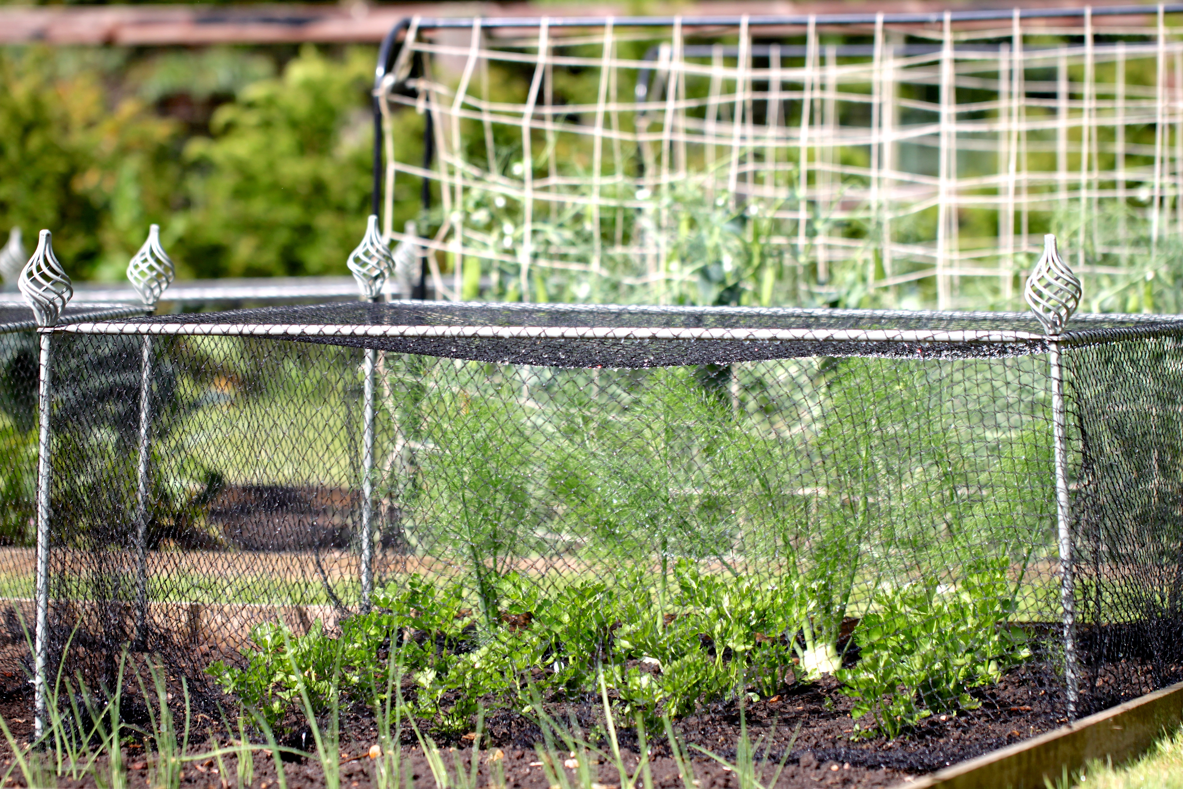 Agriframes-Elegance-Vegetable-Cage.