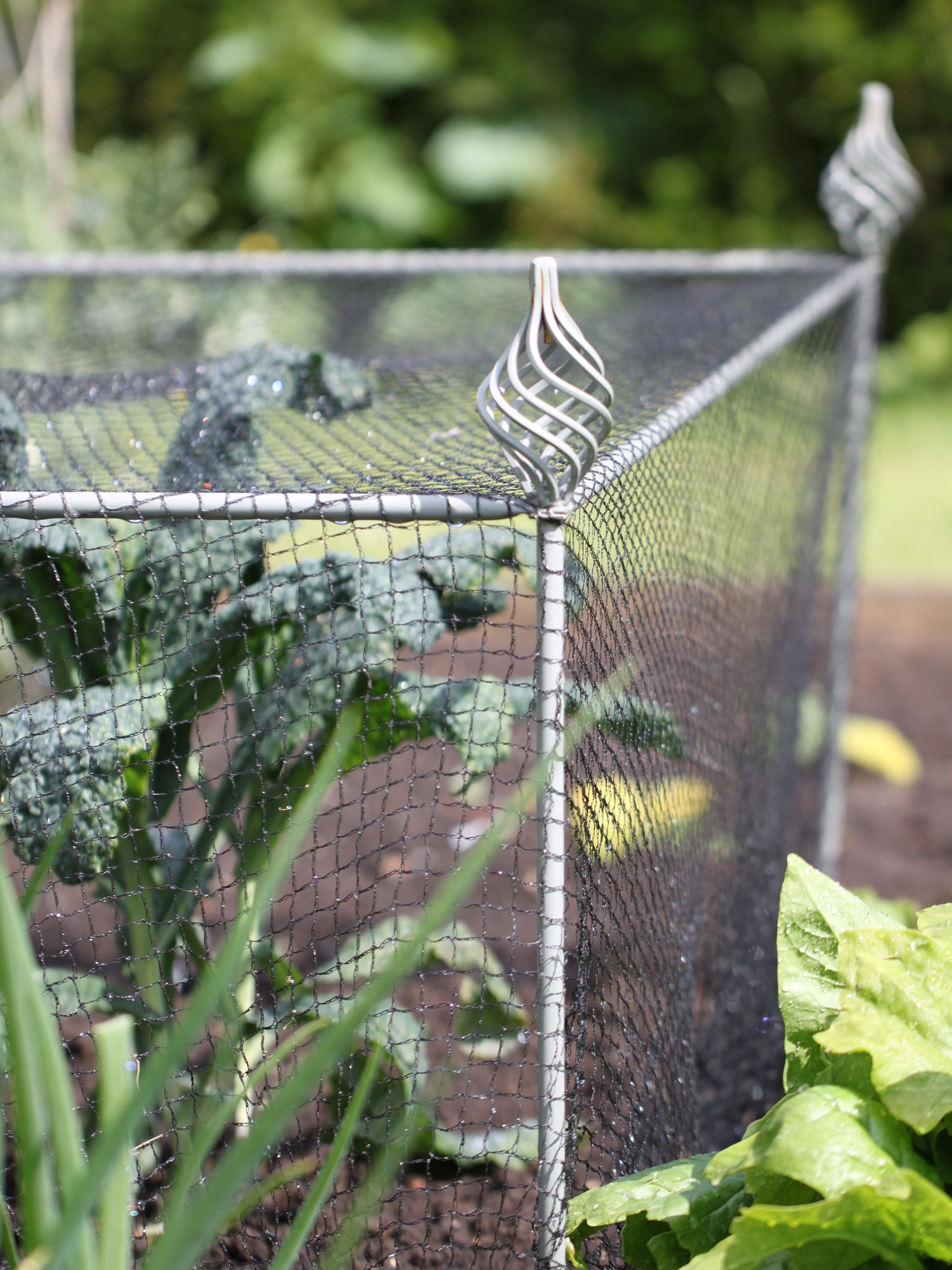Agriframes-Elegance-Vegetable-Cage