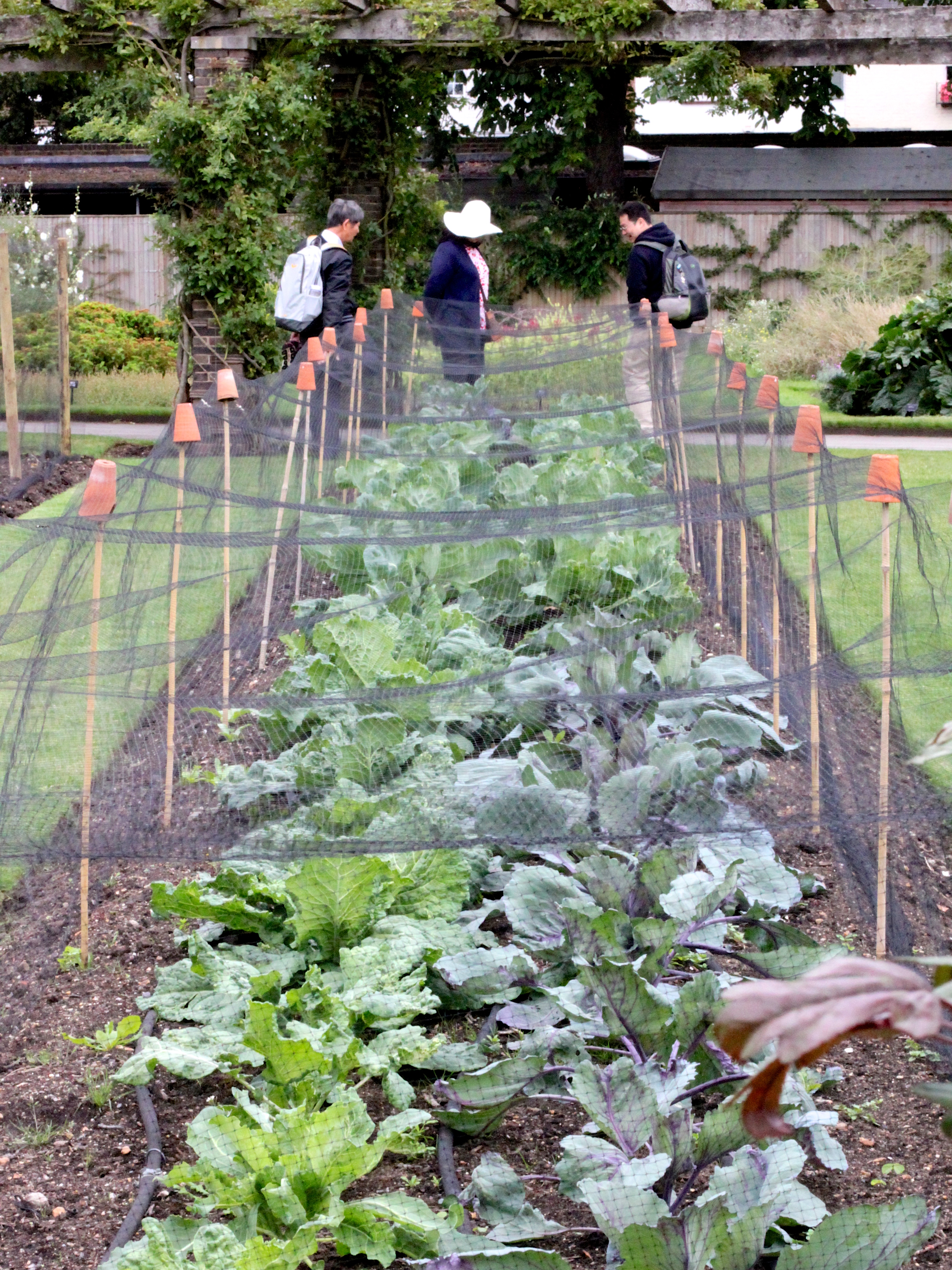 the beds s in mascha garden winter netting for bird netted