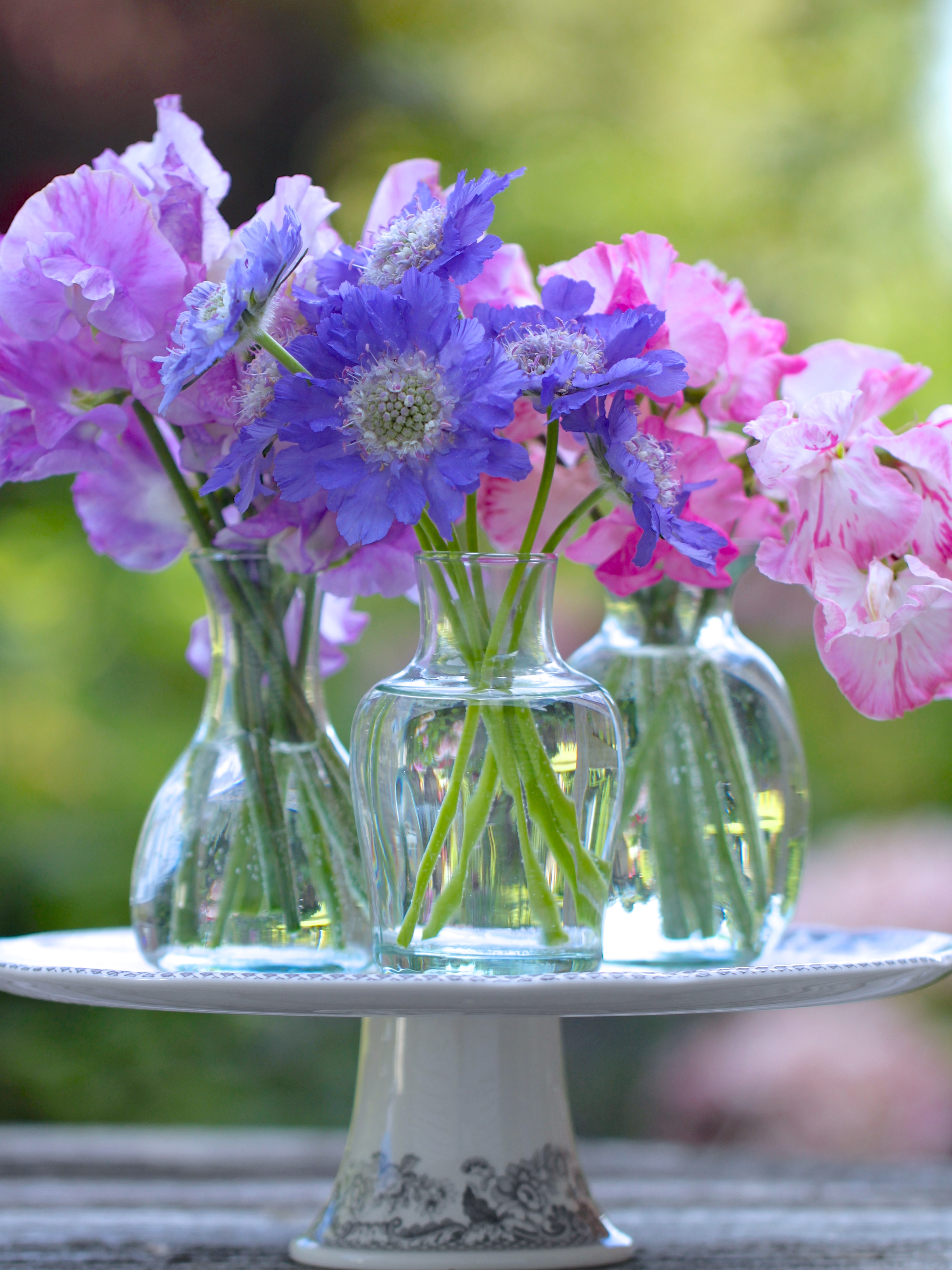 In a vase on monday a summer trioindulging floral passions i seem to have been raving about my greenhouse sweet peas for so long now that i am in danger of overlooking the lovely varieties growing outside reviewsmspy